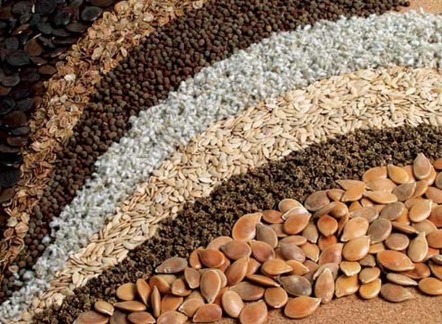 Где купить семена оптом в Москве? Где купить семена оптом в Москве от производителя?